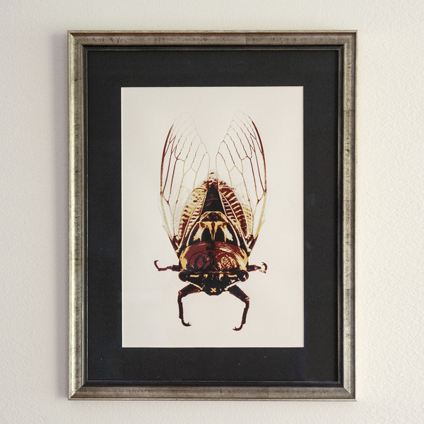 Framed Cicada Screenprint